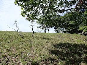 低い笹原を登る