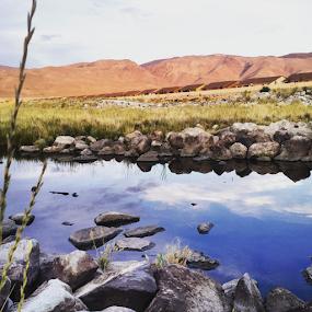 by Jennifer Watkins Odom - Landscapes Prairies, Meadows & Fields ( wetlands, creek, meadow, meadows, fields )