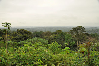 Photo: surrounding forest from a small farm hill