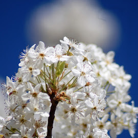 by Lisa Martin - Flowers Tree Blossoms (  )