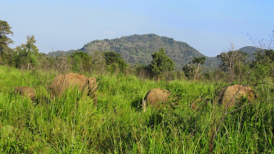 Photo: Minneriya National Park, Habarana
