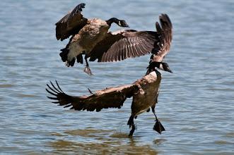 Photo: Ungainly landing