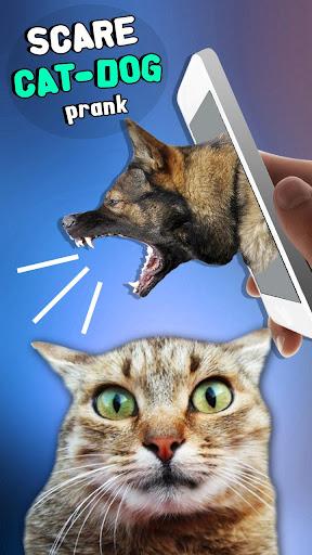 恐怖の猫 - 犬いたずら
