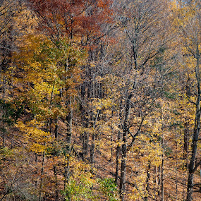 Fall in Sunnybrook Park by Dave Reece - Landscapes Forests ( canada, toronto, fall, sunnybrook )
