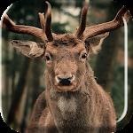 Herd of Deer Live Wallpaper