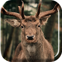 Herd of Deer Live Wallpaper icon
