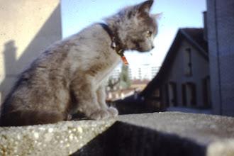 Photo: J'ai connu les humains à l'age de trois mois , vivre en ville c'est curieux pour moi