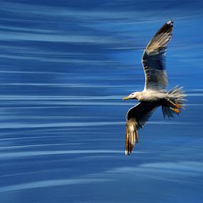 BlueSpeedLine by Uroš Florjančič - Animals Birds