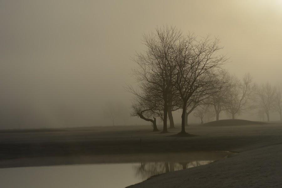 Morning fog by Thomas Fitzrandolph - Landscapes Weather ( water, fog, niagara county ny, trees, nikon d5200, sunrise, morning, spring, lockport ny, mist,  )