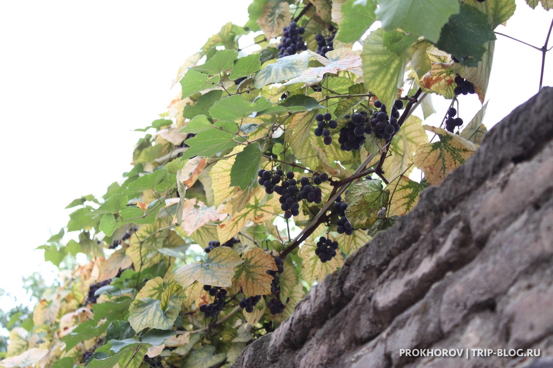 Виноград на улицах Тбилиси