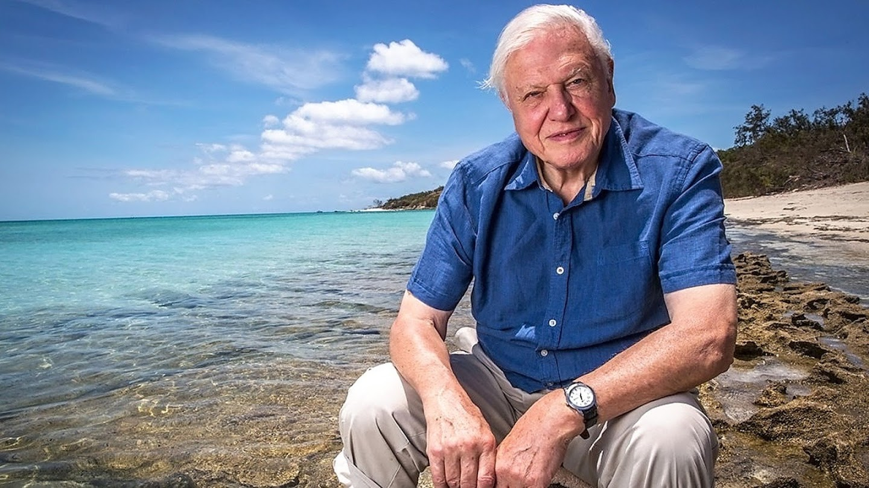Watch Great Barrier Reef live