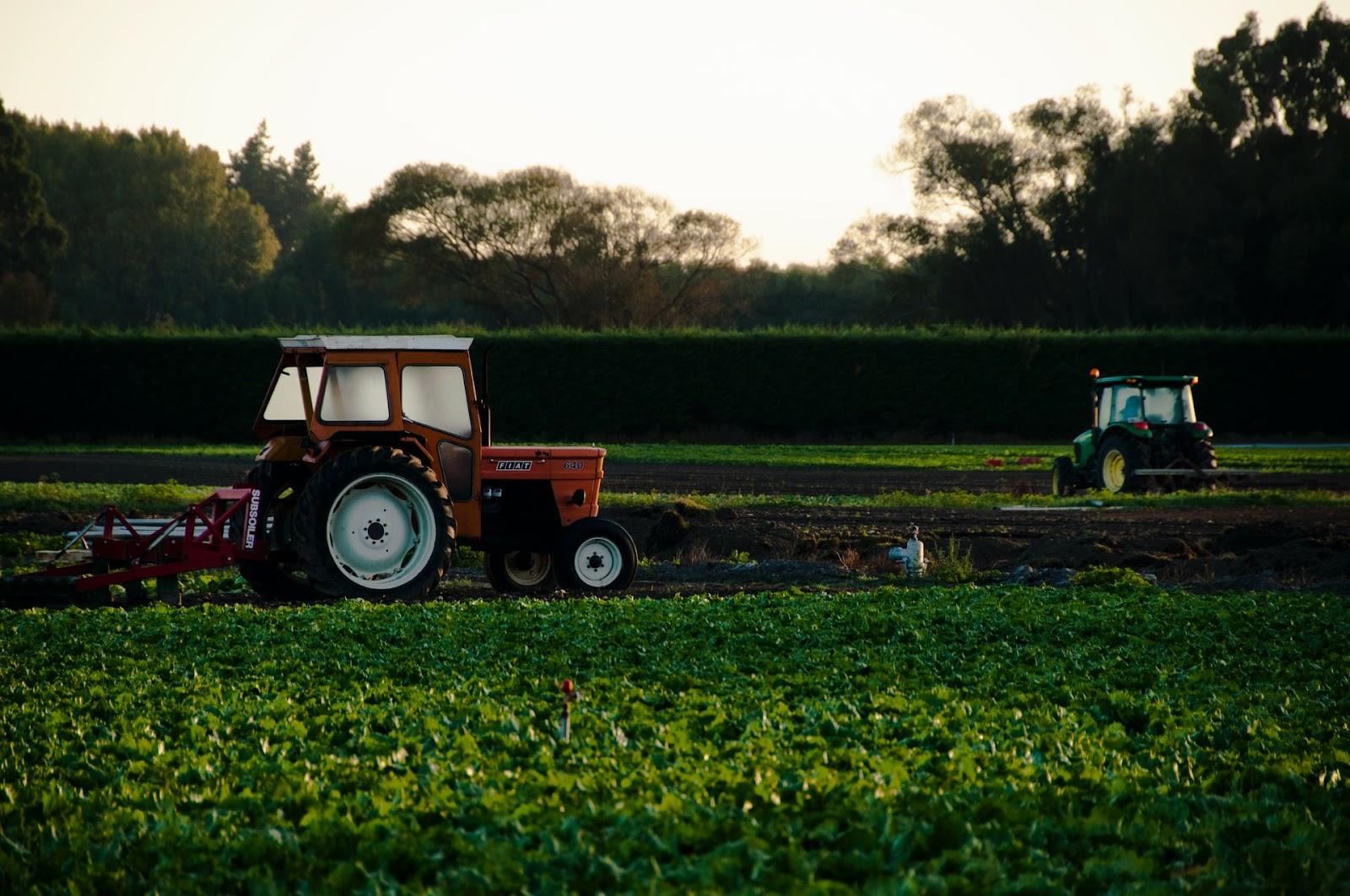 Cálculo dos custos de produção no agronegócio vai muito além de contabilizar os insumos (Fonte: Unsplash)