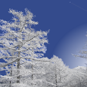 Winter Mountain icon