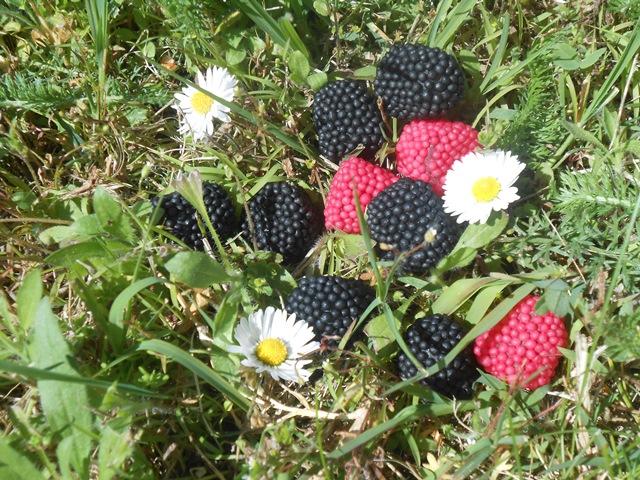 Frutti di Bosco di Classandra
