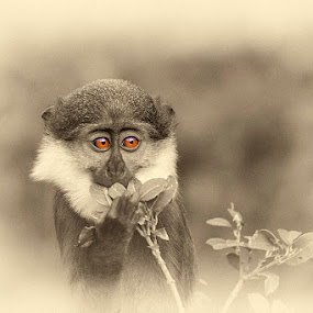 by Denis Keith - Animals Other Mammals (  )