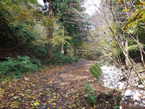 またまた林道歩き