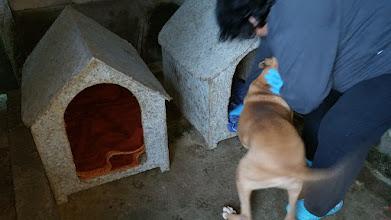 Photo: Neste último final de semana levamos cobertores e agasalhos para os nosso cães que estão em Embu-Guaçu.