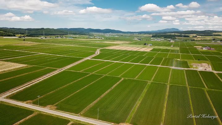 緑に染まる田んぼ風景