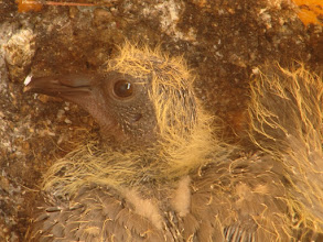 Photo: a closer look: ear and nose (on the beak).
