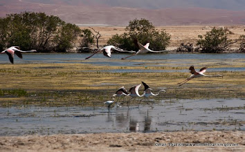 Photo: AlMagseel Lagoon