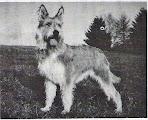 Photo: 1989 Vanda du Clos de la Sapineraie (Scapin des Mazellières x Thémis de la Baroche) Prod et Prop Mme Bucher Fraigneau Pedigree: http://www.pawpeds.com/db/?p=bpi&a=p&id=413367&g=4