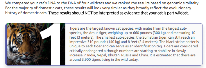 From the sample report provided by Basepaws, we see that Koko is most like a tiger. Rawr.