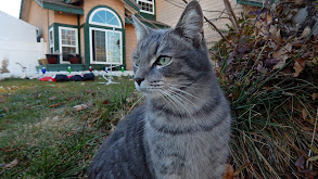 Real Housecat of Orange County thumbnail