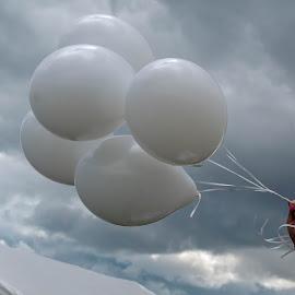 Wedding Balloons by Adele Price - Wedding Details ( white, balloons, wedding,  )