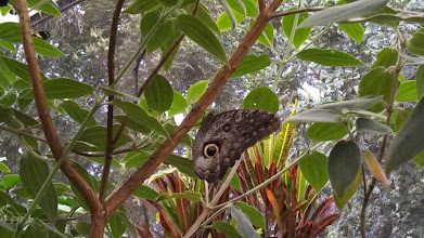 Photo: Day 3: Mariposas de Mindo, translation Butterflies of Mindo. This was a butterfly santuary we visited.