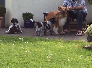 Photo: und Ellie begutachtet in Ruhe ihren neuen Kameraden Benni