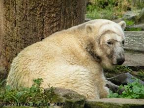 Photo: Knut liegt mit dem Aussie Teil in der Schlafkuhle ;-)