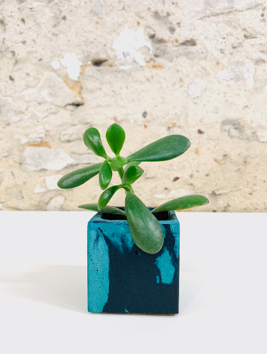 plante dans pot en béton