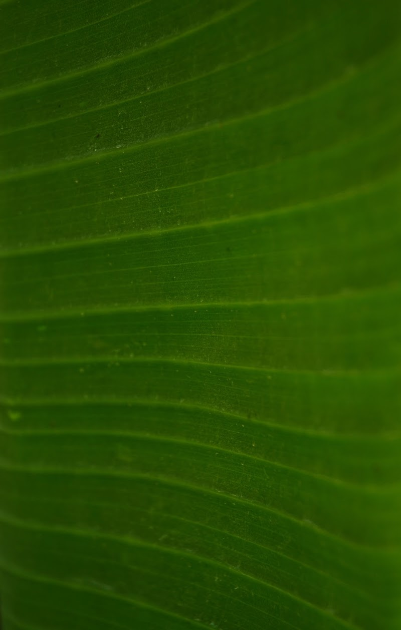 Nature di sabrina arini