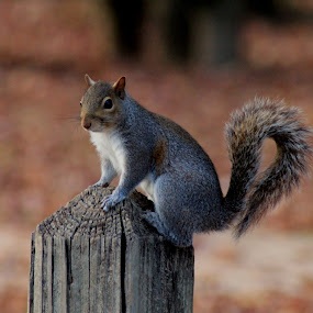 by Thomas Vasas - Animals Other ( animals, squirrels, pets, wildlife,  )