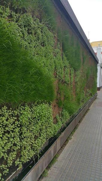 crecimiento del jardín vertical