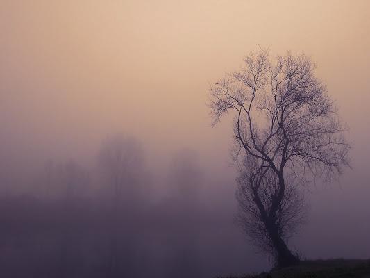 Parla per me, silenzio, ch'io non posso di www.fioregiallophoto.it