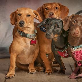 Mom & the Kids by Lynn Wiezycki - Animals - Dogs Portraits ( pets, dog )
