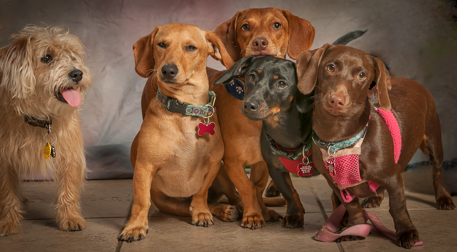 Mom & the Kids by Lynn Wiezycki - Animals - Dogs Portraits ( pets, dog )