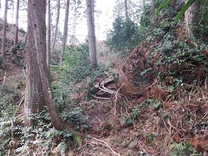 踏み跡を辿るが倒木が邪魔
