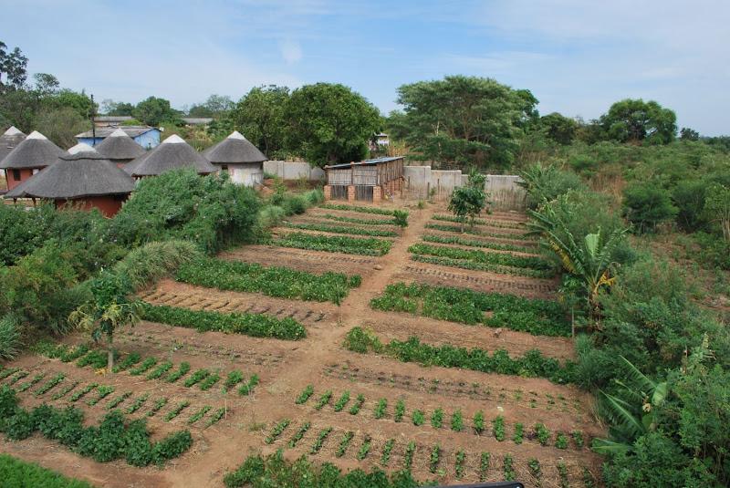 Kamutamba Farm