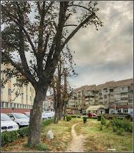 Photo: Turda - Piața Romană, castan  - 2018.09.04