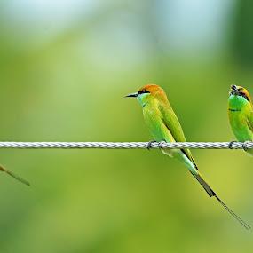 by Vasanth Photographer - Animals Birds ( green, bird photos,  )