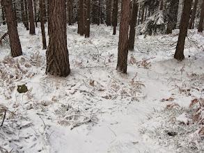 Photo: Szlak pttk-owski zielony prowadzi ku Węglarzowi, natomiast ja odbijam dydaktycznym ku Uniemyślowi.