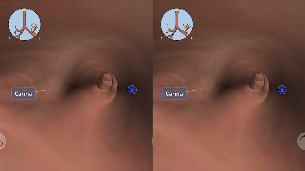 Anatomyou VR: 3D Human Anatomy- screenshot