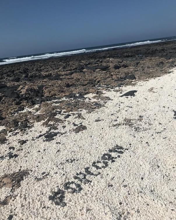 Fuerteventura e a praia da pipoca das Ilhas Canárias