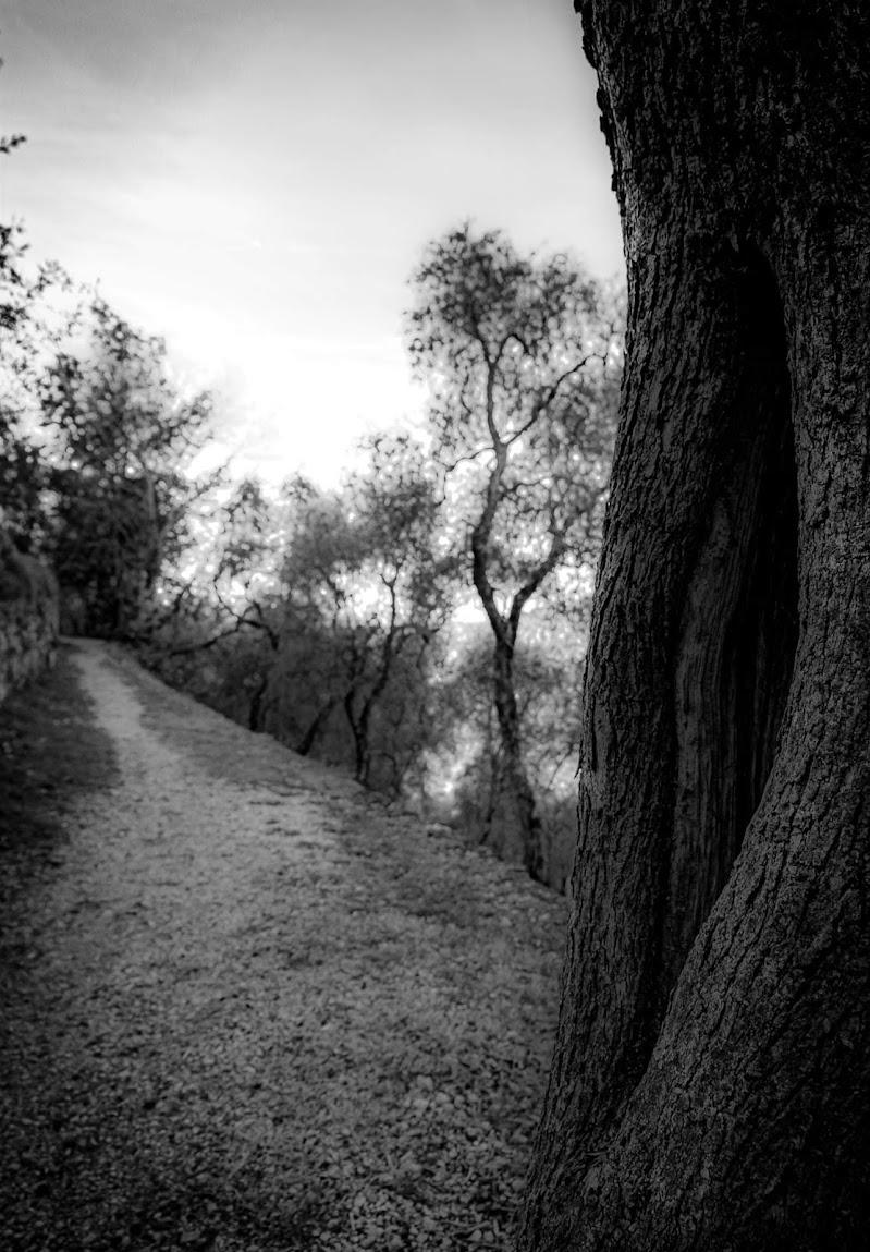 Il cammino  di Manuelebernardi1977