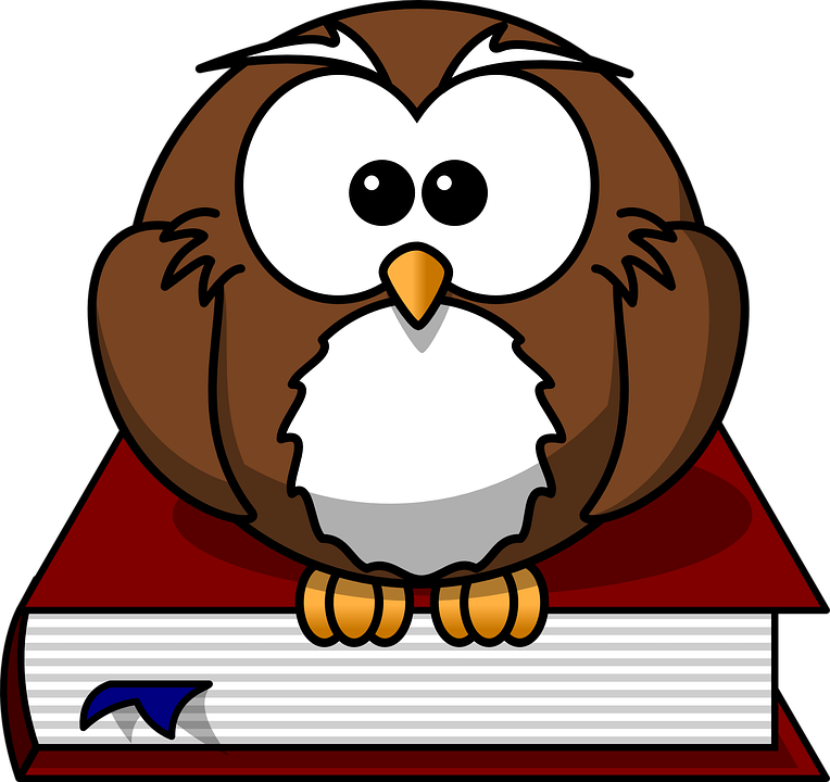 Owl, Bird, Book, Wise, Nature,