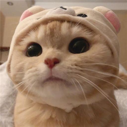 cat 03.jpg