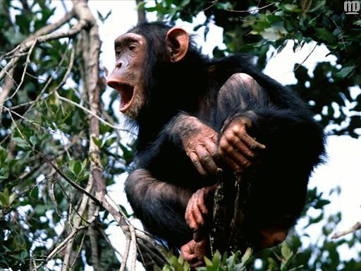 http://lh3.google.com/LisaSmirnoff/RtmoLrKXkgI/AAAAAAAABfo/O3dGWSDGBFU/monkey.jpg?imgmax=512