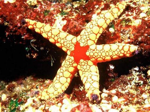 http://lh6.google.com/LisaSmirnoff/RtnVbbKXocI/AAAAAAAACAs/HWfxs6Id0TI/sea-star.jpg?imgmax=512